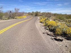 Saguaro National Park Biking – Tucson, Arizona