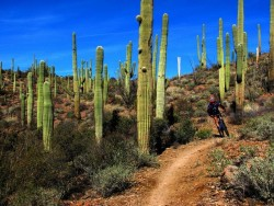 Sweetwater Preserve, Tucson Arizona