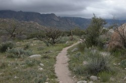 50-Year Golder Ranch Mountain Bike Trail, Tucson AZ